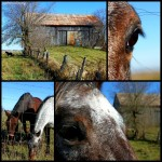 creemore-horses-collage-for-wordpress